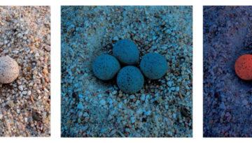 eggs_colors