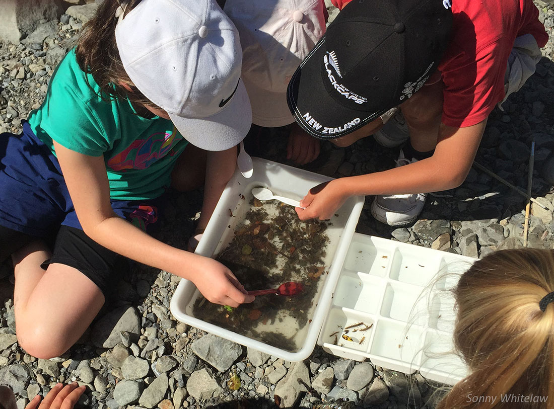Children sorting and identifying freshwater invertebrates is a fantastic way to discover the importance of invertebrates in the ecology of braided rivers.