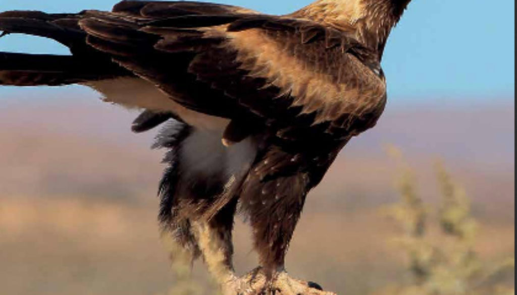 stateofbirdsAustralia