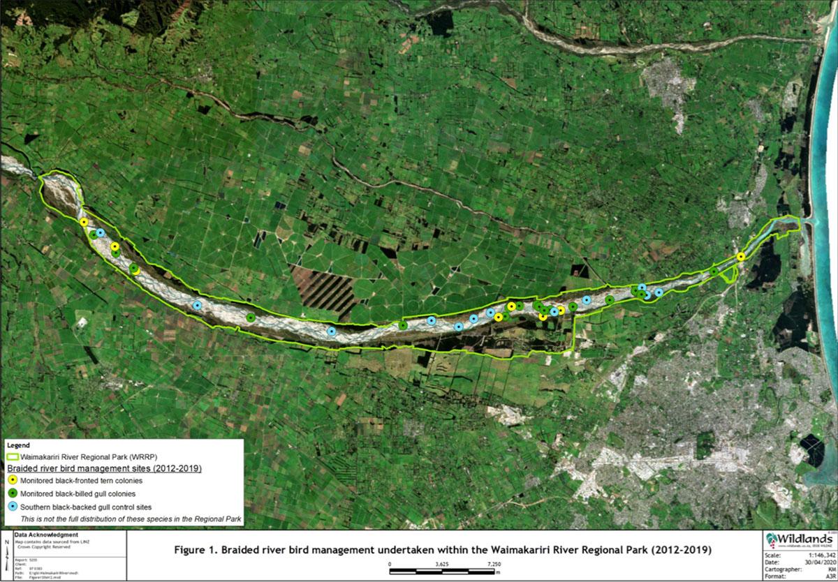 From Wildlands Consultants braided river bird management plan