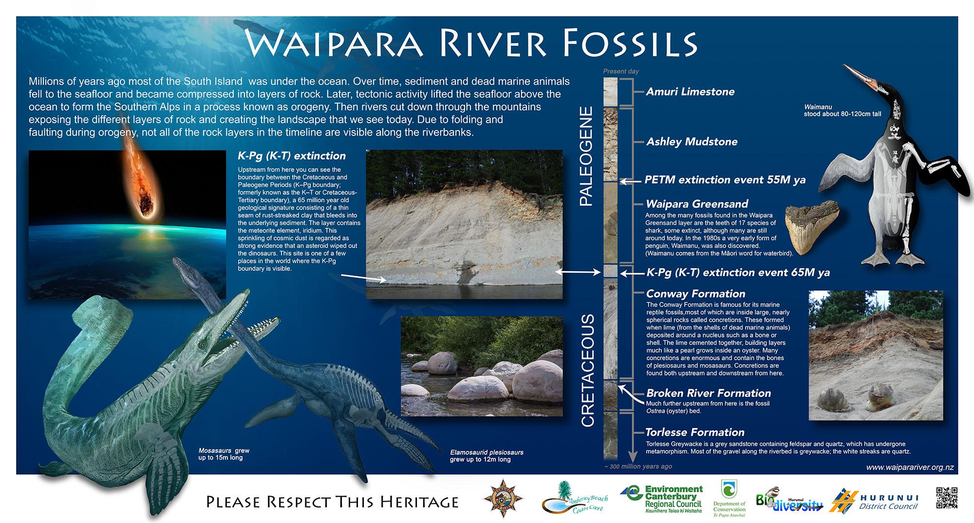 waipara river fossils
